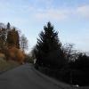 Baumfällung Hang_3