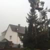 Baumfällung mit anschließenden Häckselarbeiten_4