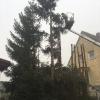 Baumfällung mit anschließenden Häckselarbeiten_6