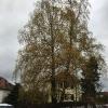 Fällung am Fasanerieberg (referenzen aktuell)_1
